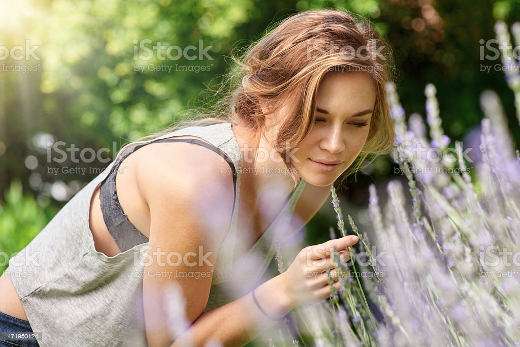 The healing power of lavender stock photo