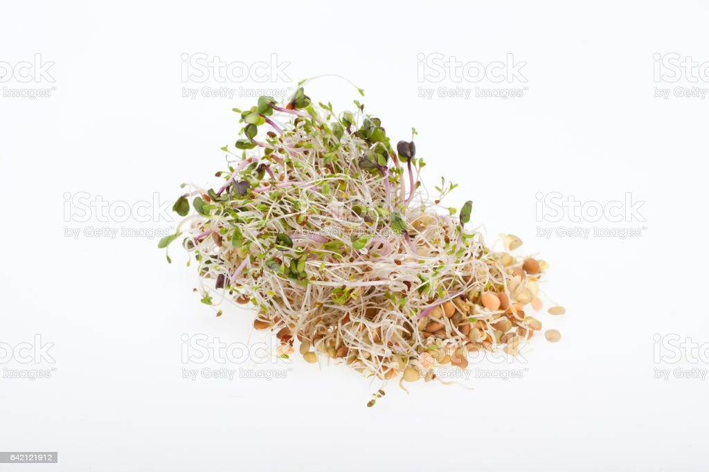 The healthy diet. Fresh sprouts isolated on white background stock photo