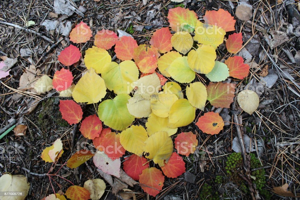 The heart of autumn, everything has its drawbacks. stock photo