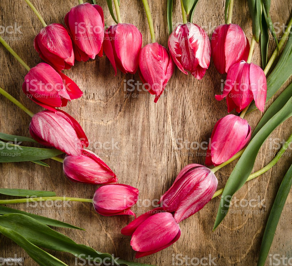 The heart-shaped frame of fresh tulips stock photo