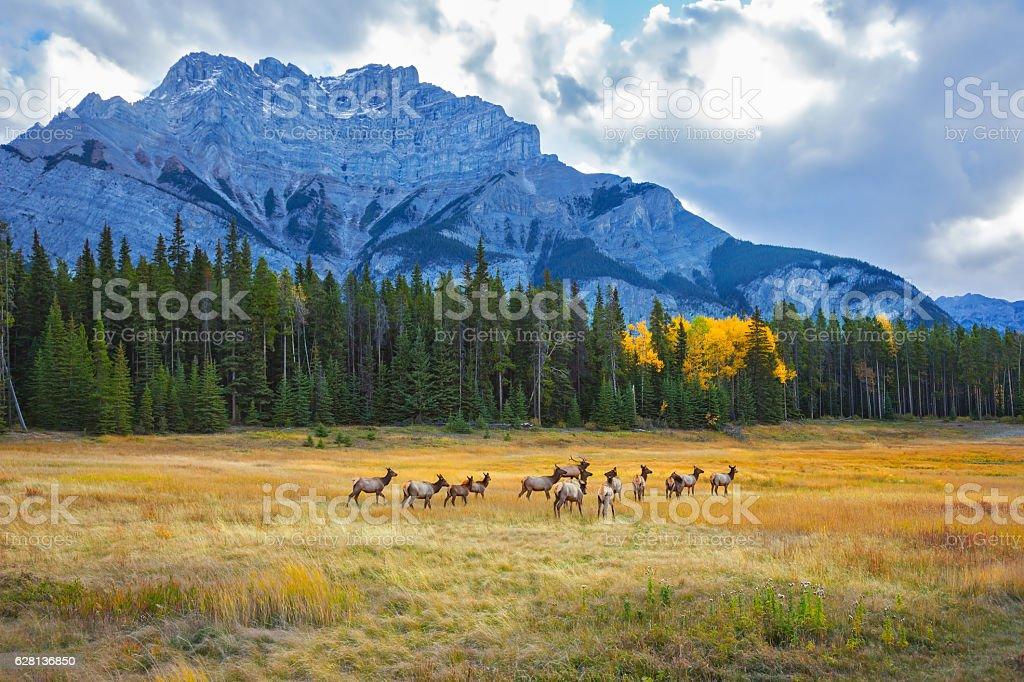 The herd of deer and calves stock photo