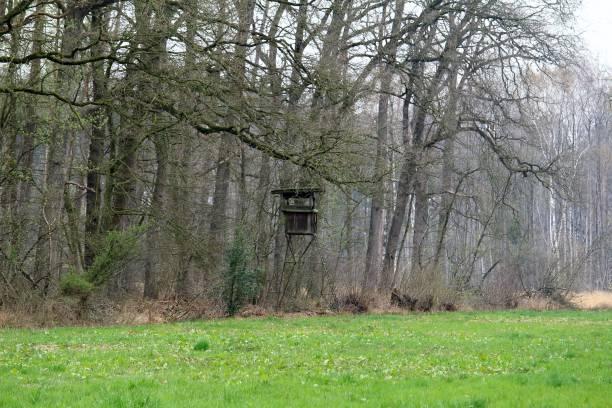 The High Seat ein Hochsitz ziwschen Wiese und Waldrand hunting blind stock pictures, royalty-free photos & images