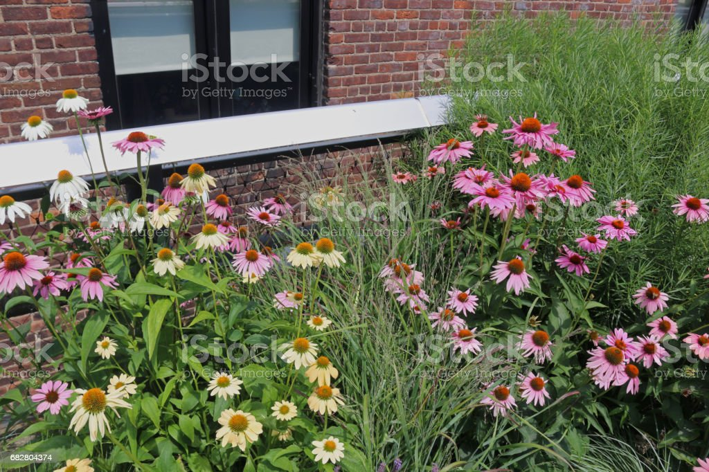 The Highline Garden Stock Photo Download Image Now Istock