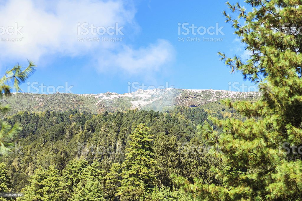 The Himalayna forests of Bhutan. stock photo