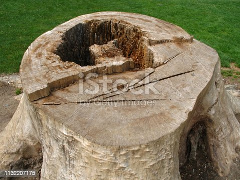 The hollow stump of a tree with grass