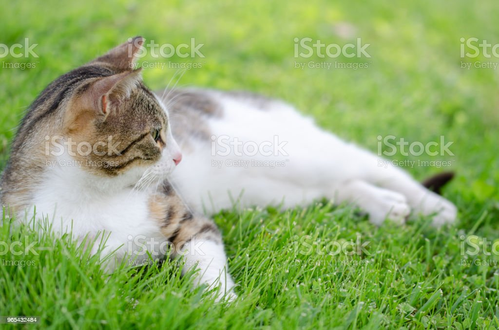 The homeless cat royalty-free stock photo