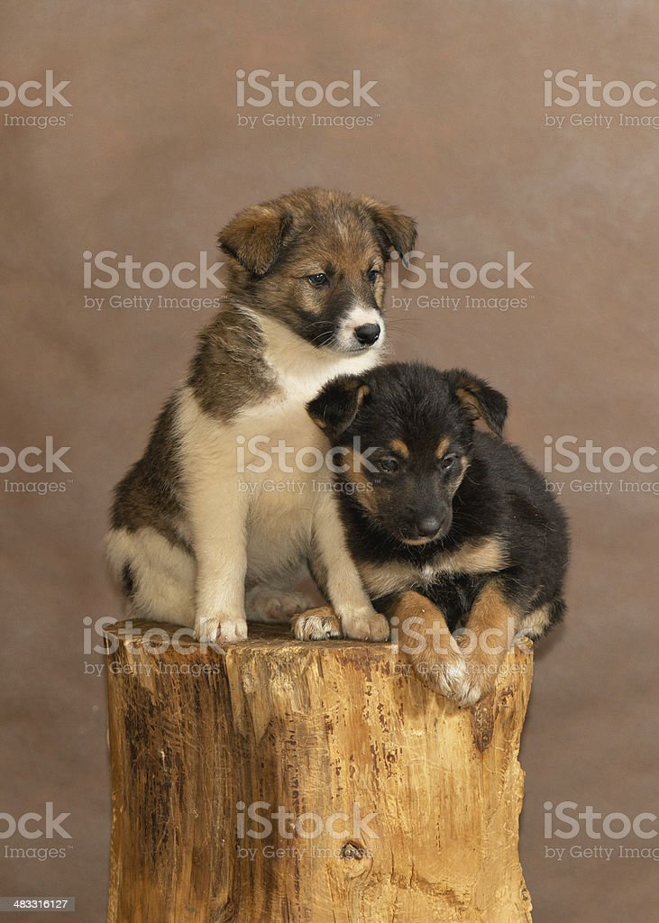 Бездомных собак thrown люди стоковое фото