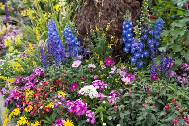 香港花卉展覽圖像檔