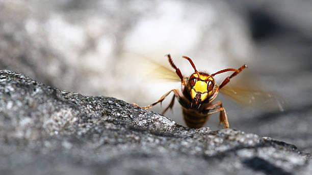the hornets score! - moordenaar stockfoto's en -beelden