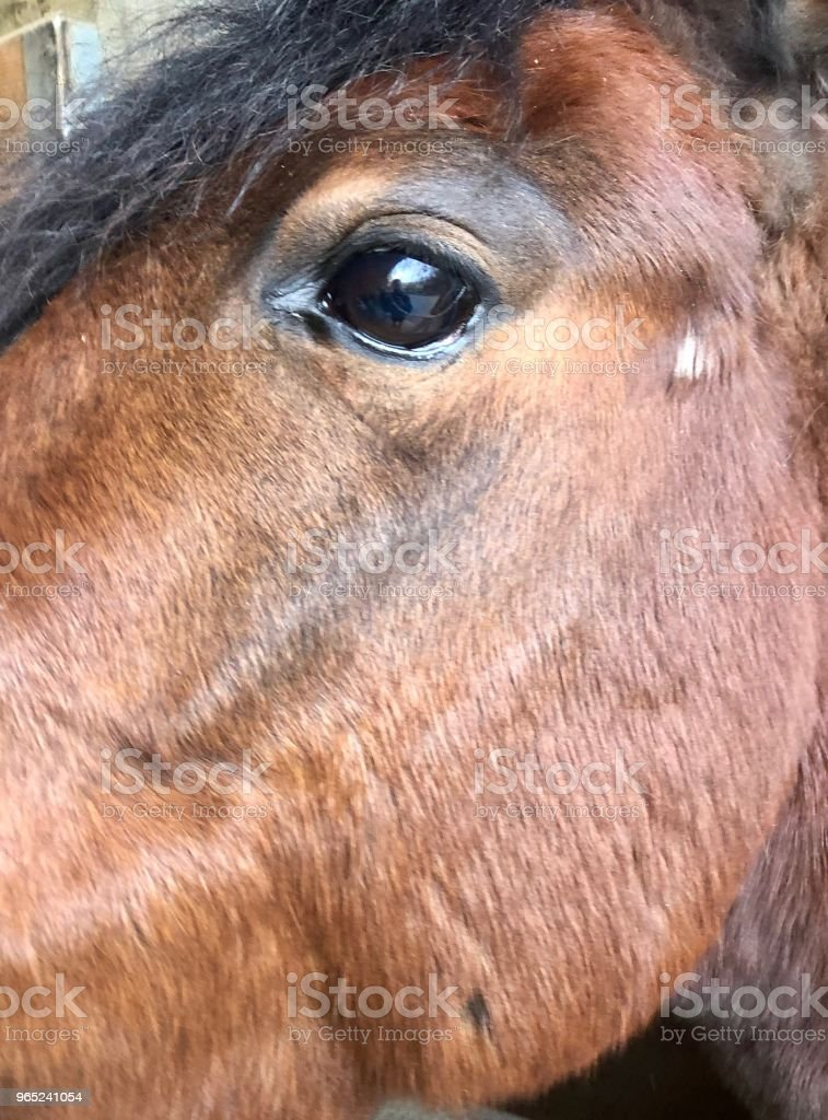 The Horse Is Watching royalty-free stock photo