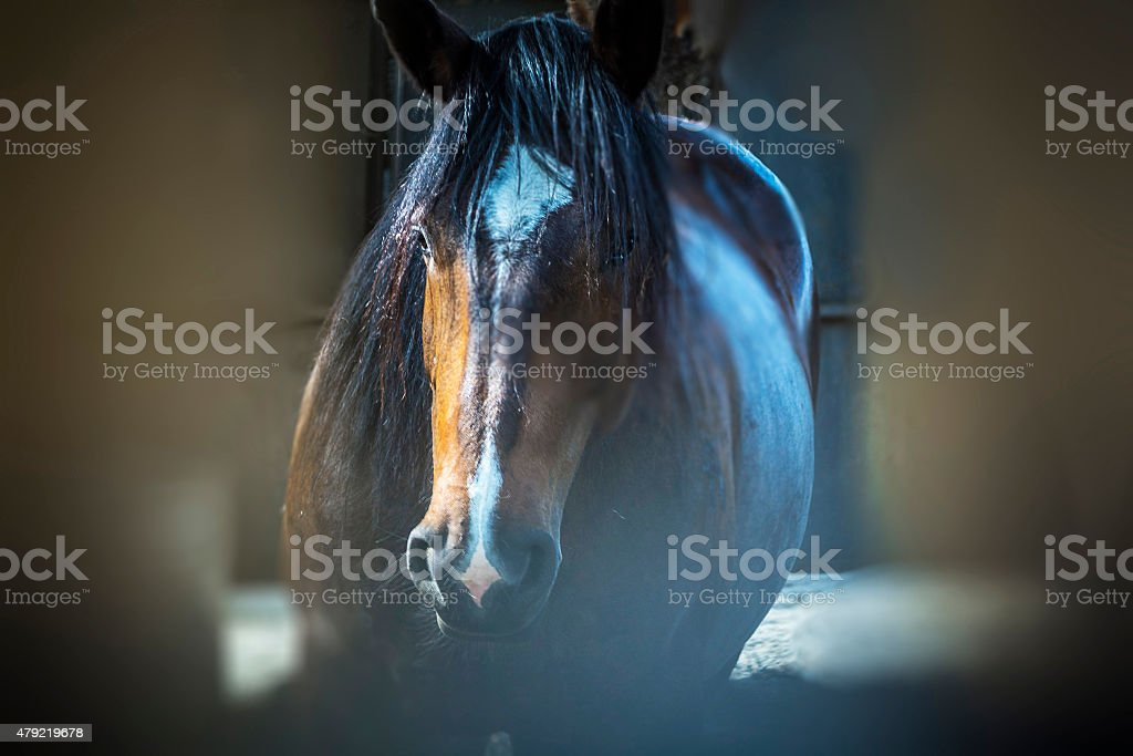 The Horse stock photo