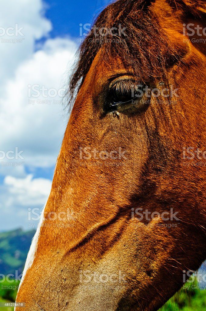 Das horse – Foto