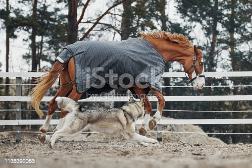 The horse plays with the dog in the paddock.