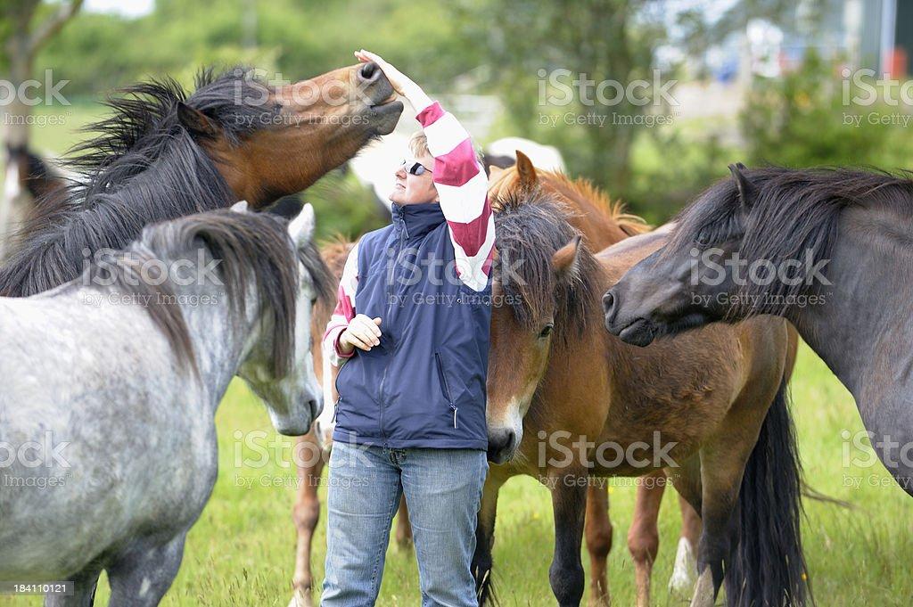 The horse whisperer royalty-free stock photo