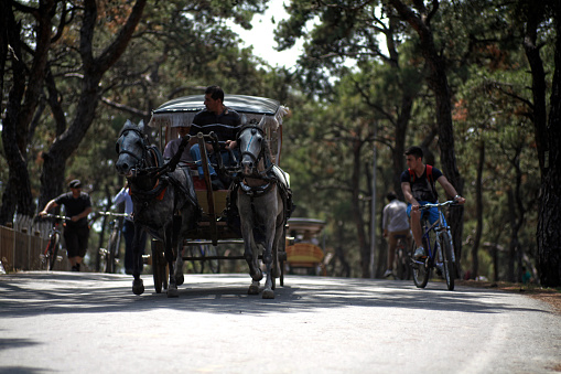 View of a horse cart captured on the 06/08/2014 in main street of Princess Island, Istanbul, surrounded by trees.