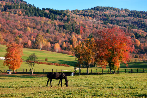 the horses graze in the high mountains