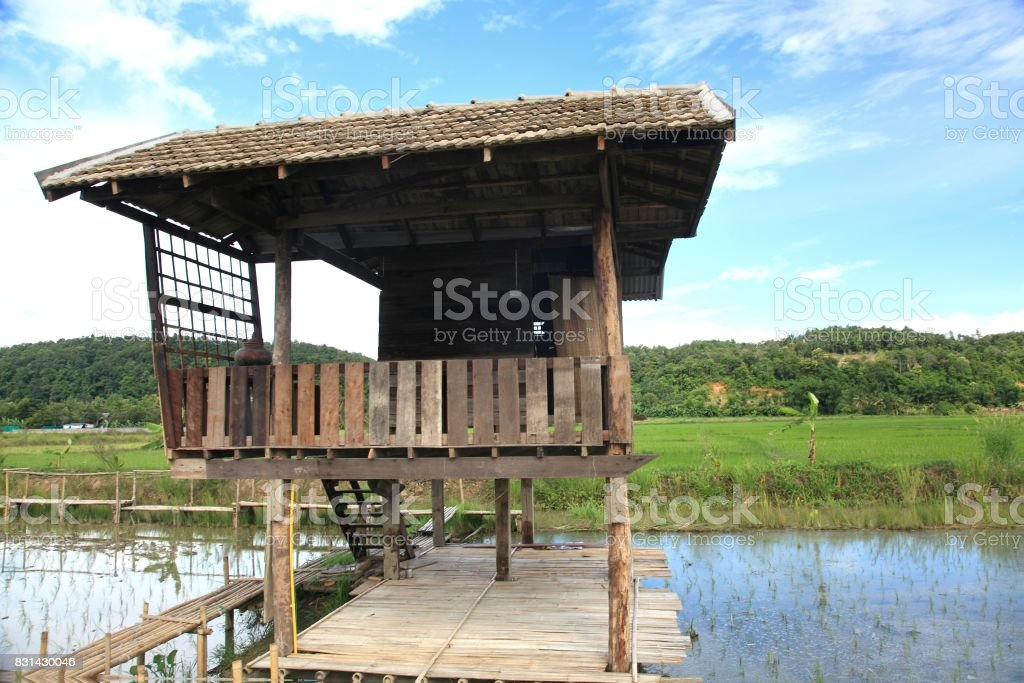 The house  and rice field in chiang dao city , chiangmai Thailand stock photo