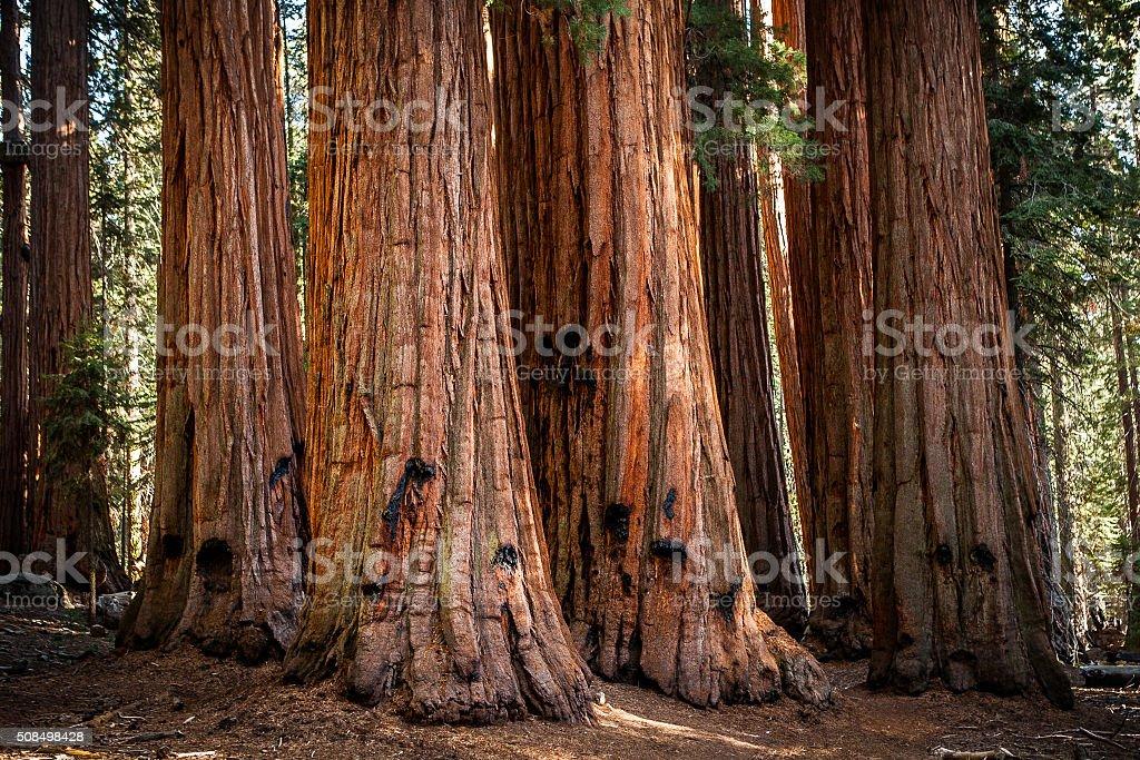 The House, Grove of Giant Sequoias, Sequoia National Park stock photo