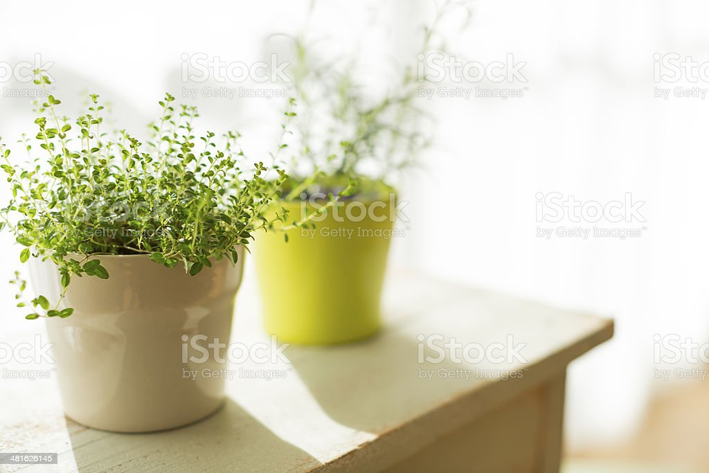 The houseplant which there is in a room stock photo