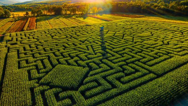 Labyrinthe de maïs de l'Halloween énorme en Pennsylvanie, région des Poconos - Photo