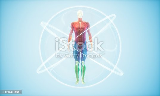 The human body Concepts