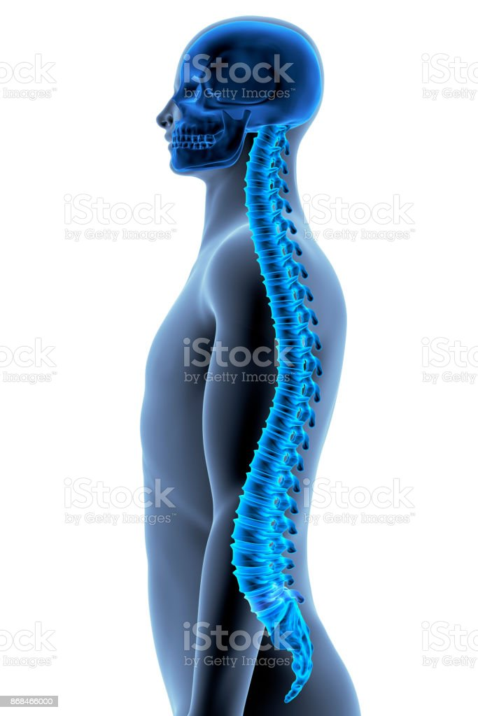 The Human Body - Spine The Human Body - Spine. Side View. X-ray Effect. 3D illustration Adult Stock Photo