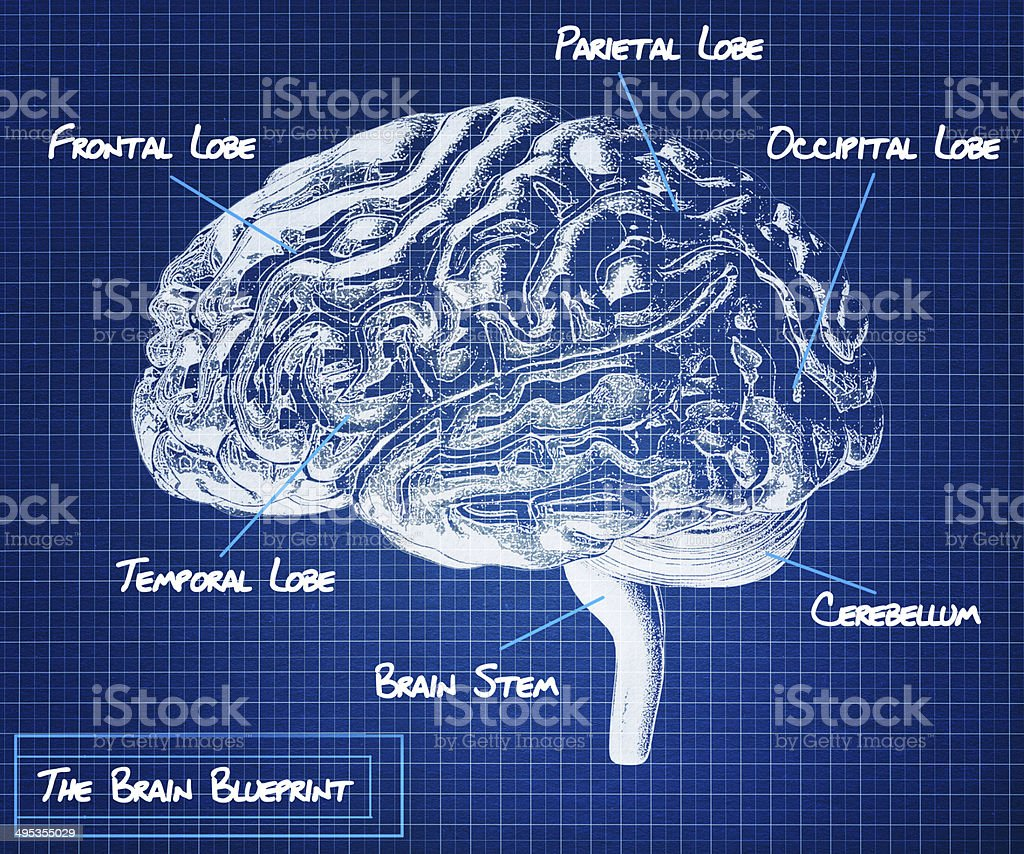 The human brain blueprint. stock photo