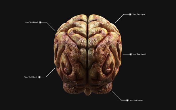 het menselijk brein in de Achteraanzicht met uitknippad. foto