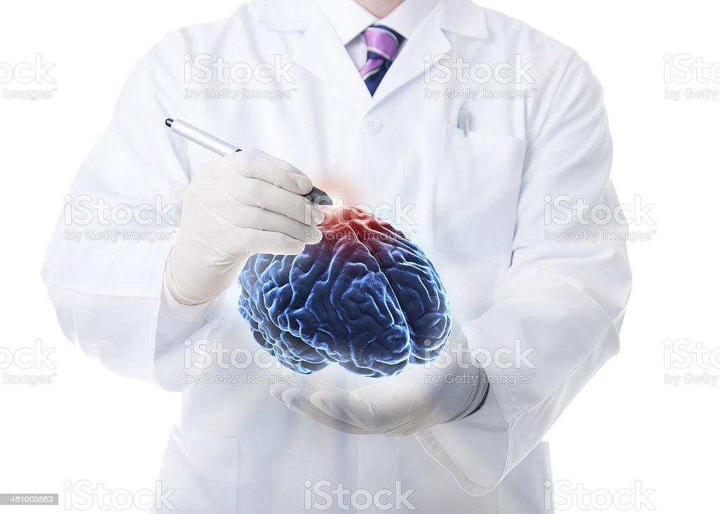 The human brain stock photo