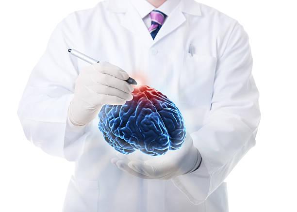 Das menschliche Gehirn – Foto
