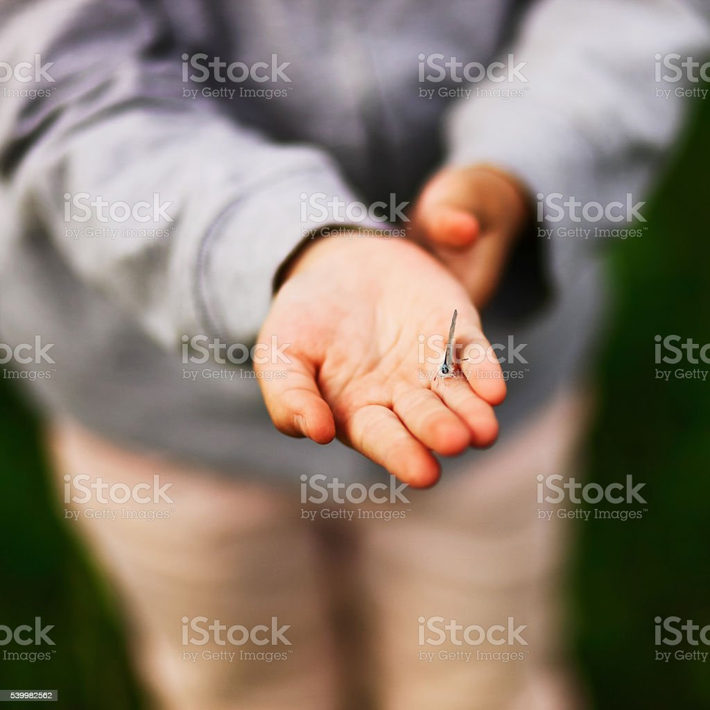 The human hands. stock photo