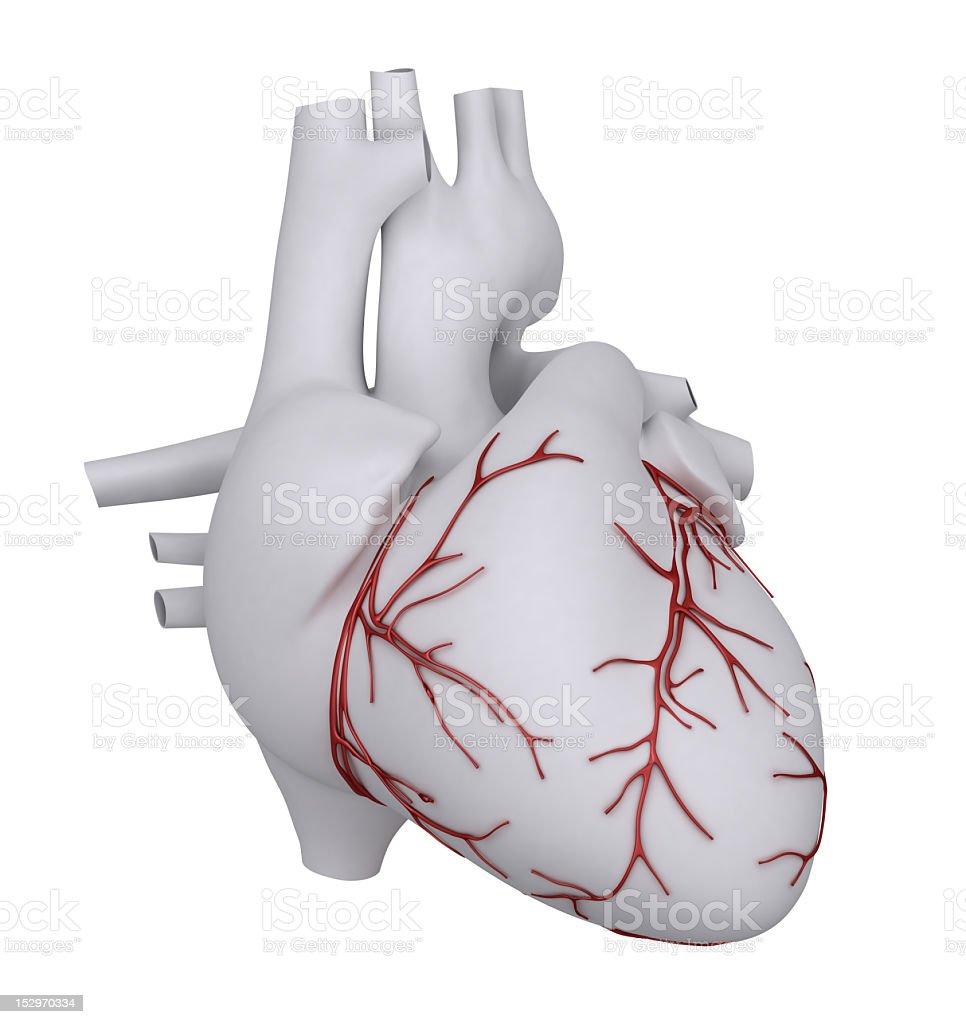 Coração Humano com coronário - foto de acervo