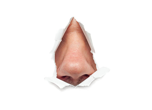 The human nose sticks out through a hole stock photo