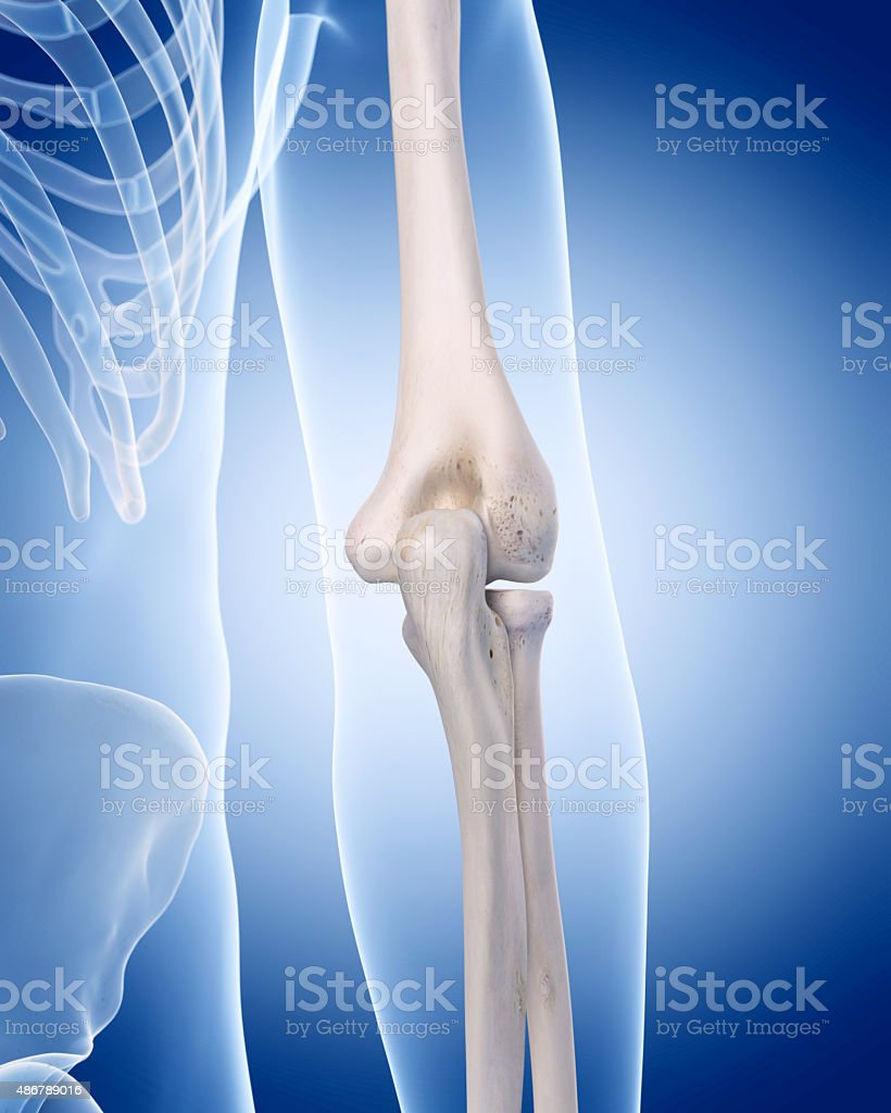the human skeleton - the elbow stock photo