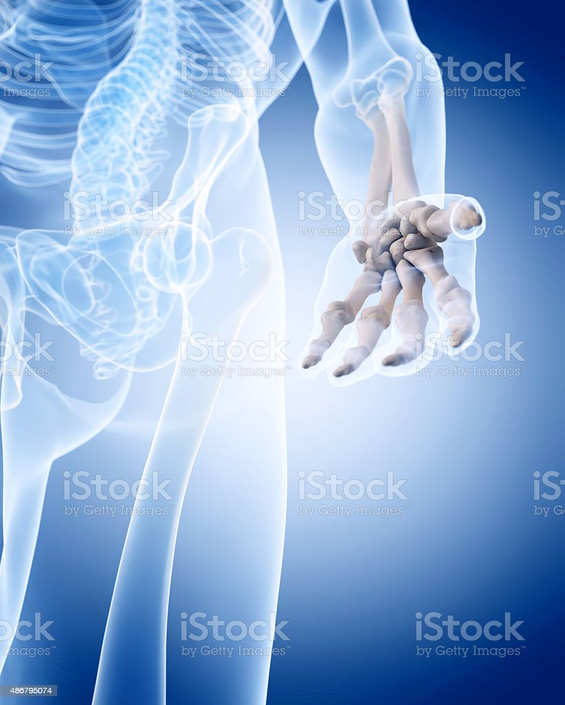 The Human Skeleton The Hand Stock Photo More Pictures Of 2015 Istock
