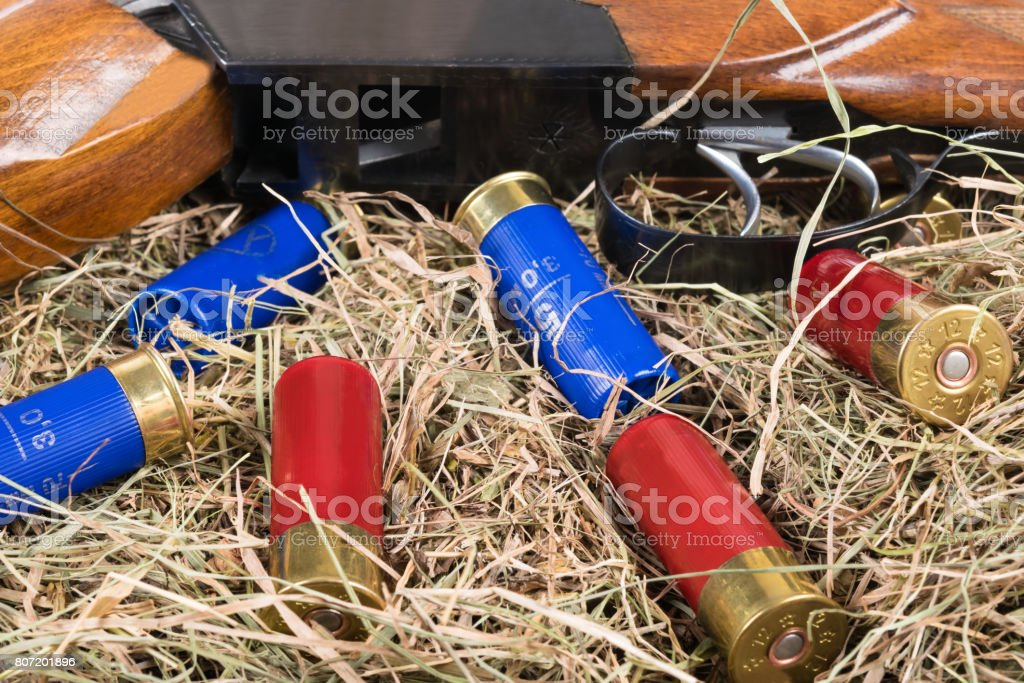 The hunting rifle and cartridges lie on the background of hay stock photo