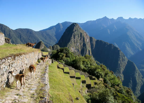 The iconic view of Macchu Picchu taken from a ledge above the ruins stock photo