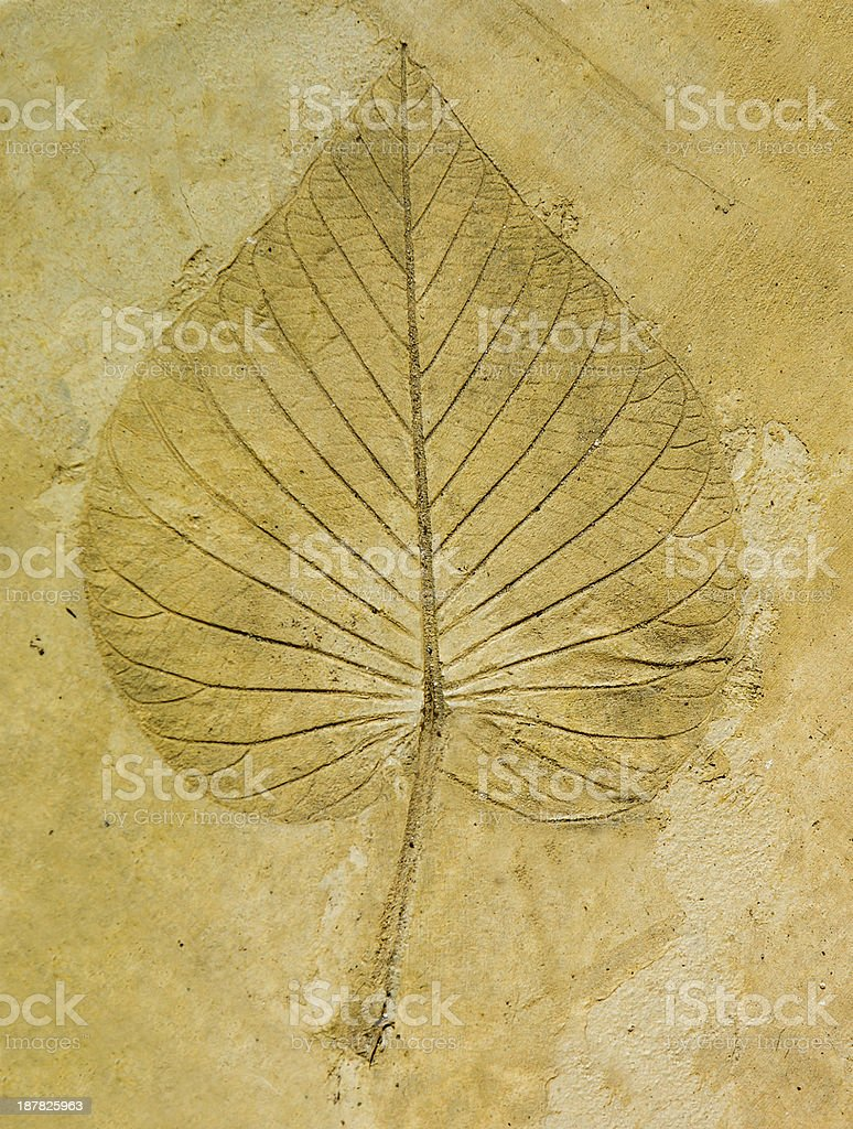 The Imprint leaf on cement floor background stock photo