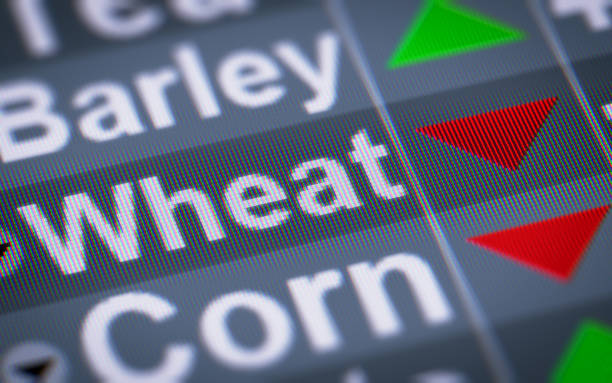 The Index of Wheat on The Screen. stock photo