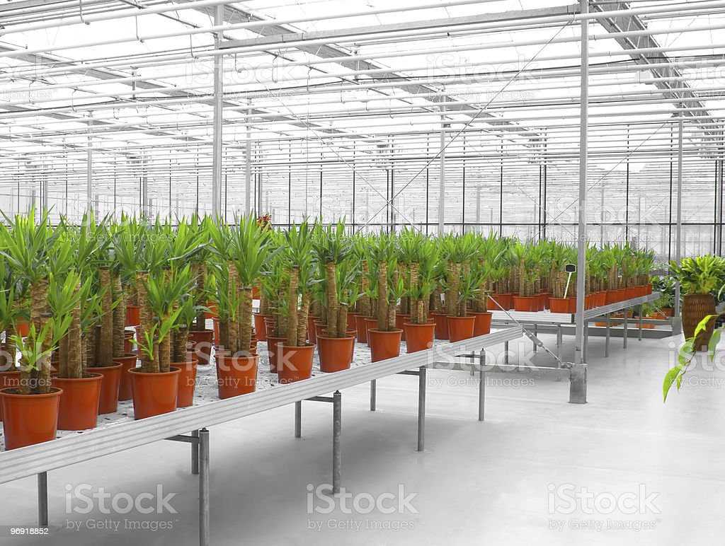 The Industrial hothouse royalty-free stock photo