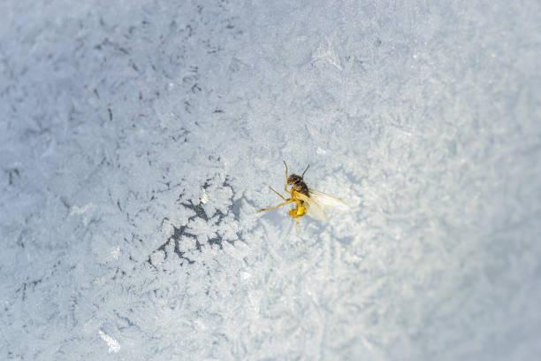 das insekt auf dem fenster - fliegengittertüre stock-fotos und bilder