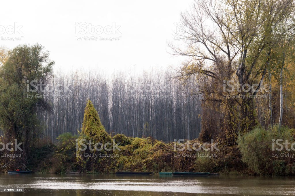 The inshore trees. stock photo