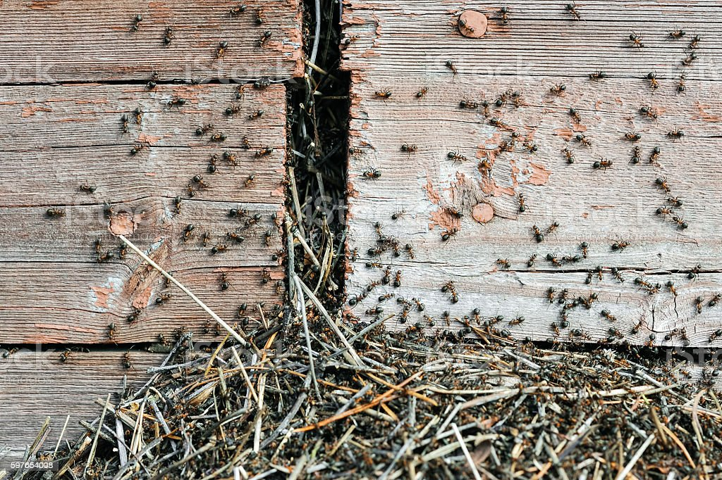 The invasion of the ants stock photo