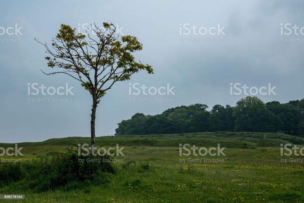 The Iron Age hillfort of Badbury Rings in Dorset stock photo