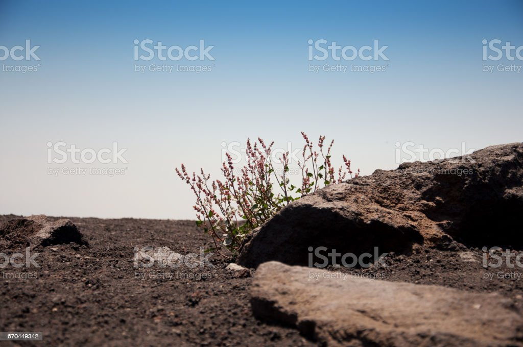 The island of Sicily. Wild landscape. The volcano Etna. stock photo
