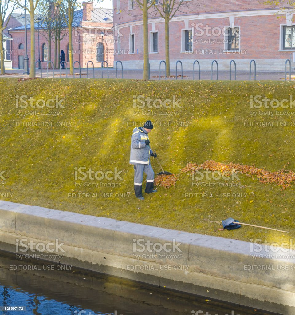 . the janitor with a rake removes leaves stock photo