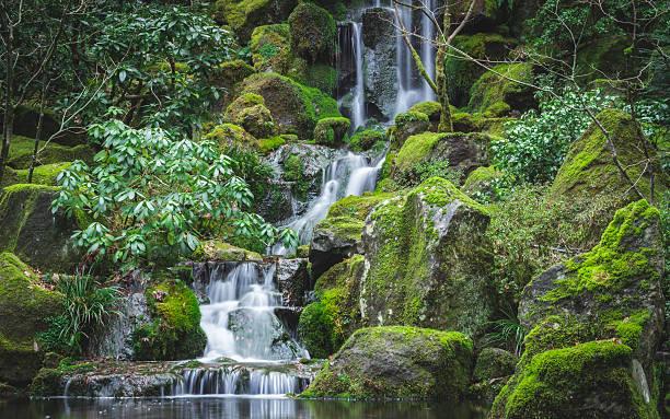 der japanische garten mit wasserfall - japanischer garten stock-fotos und bilder