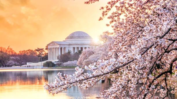 o Memorial de Jefferson durante o Festival da flor de cereja - foto de acervo
