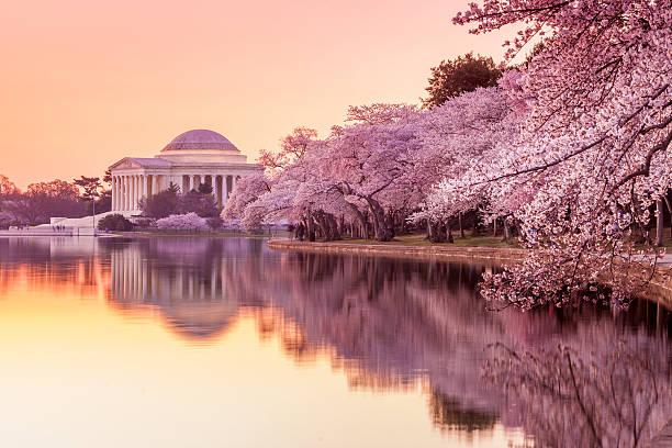 ジェファーソン記念館に、桜祭り - 各国の観光地 ストックフォトと画像