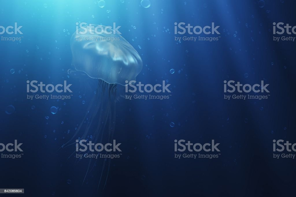 The jellyfish swims up under the water 3d illustration stock photo